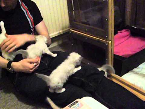 Mauled by Kittens!