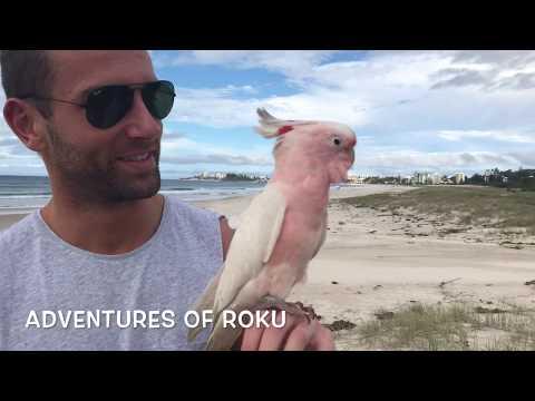 Pabu's First Flight at the Beach