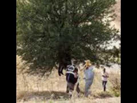 Aydın'da, ağaca asılı ceset bulundu