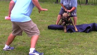 Developing Protection Dogs  in two ways! You gatta see this!