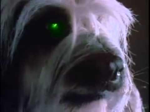 Stephen king dog movie