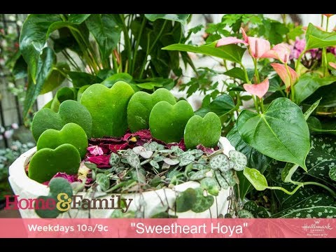 Plants With Heart Shaped Leaves And Flowers Youtube