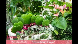 Plants with Heart Shaped Leaves and Flowers