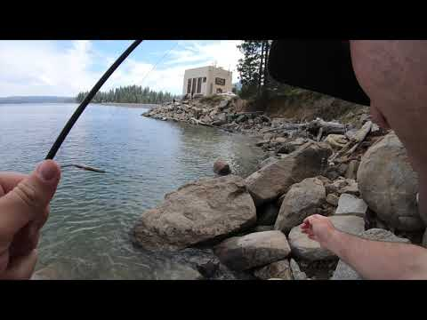 Shaver Lake Trout Fishing 7/7/2019