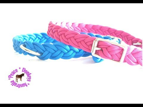 plaited-adjustable-paracord-dog-collar-for-small/medium-dog
