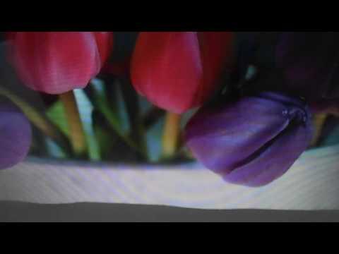 история проиисхождения тюльпана легенды о тюльпане тюльпан