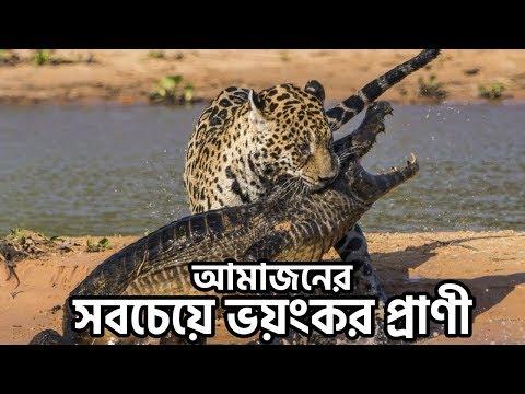 আমাজন বনের সবচেয়ে ভয়ংকর ৫টি প্রাণী | 5 Deadliest Animals In Amazon Rainforest - FactsBD
