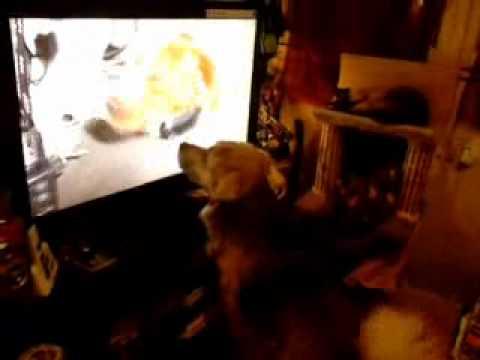 mon chien regarde la t l vision youtube. Black Bedroom Furniture Sets. Home Design Ideas