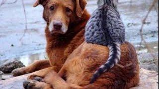 США ПРИЮТ ДЛЯ ЖИВОТНЫХ собаки И кошки от которых отказались 09.01.16 БЕЗДОМНЫЕ ЖИВОТНЫЕ В АМЕРИКЕ(Моя музыкальная группа в ВКонтакте - http://vk.com/musicden США агрессор, а Россия - ангел - https://www.youtube.com/watch?v=jXr47Ta79AQ..., 2016-01-10T06:05:15.000Z)