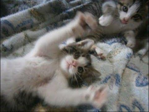 裏山から来た野良子猫ちゃんが、シンクロ(笑)Kittens of synchro【いなか猫1777】japanese funny cat