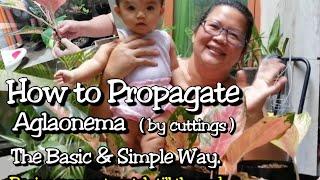 How To Propagate Aglaonema: Lola Malyn Way.