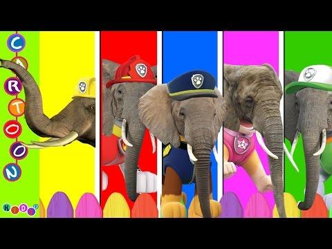 Paw Patrol Elephant Animal Finger Family Nursery Rhymes ◕‿◕ KidsF