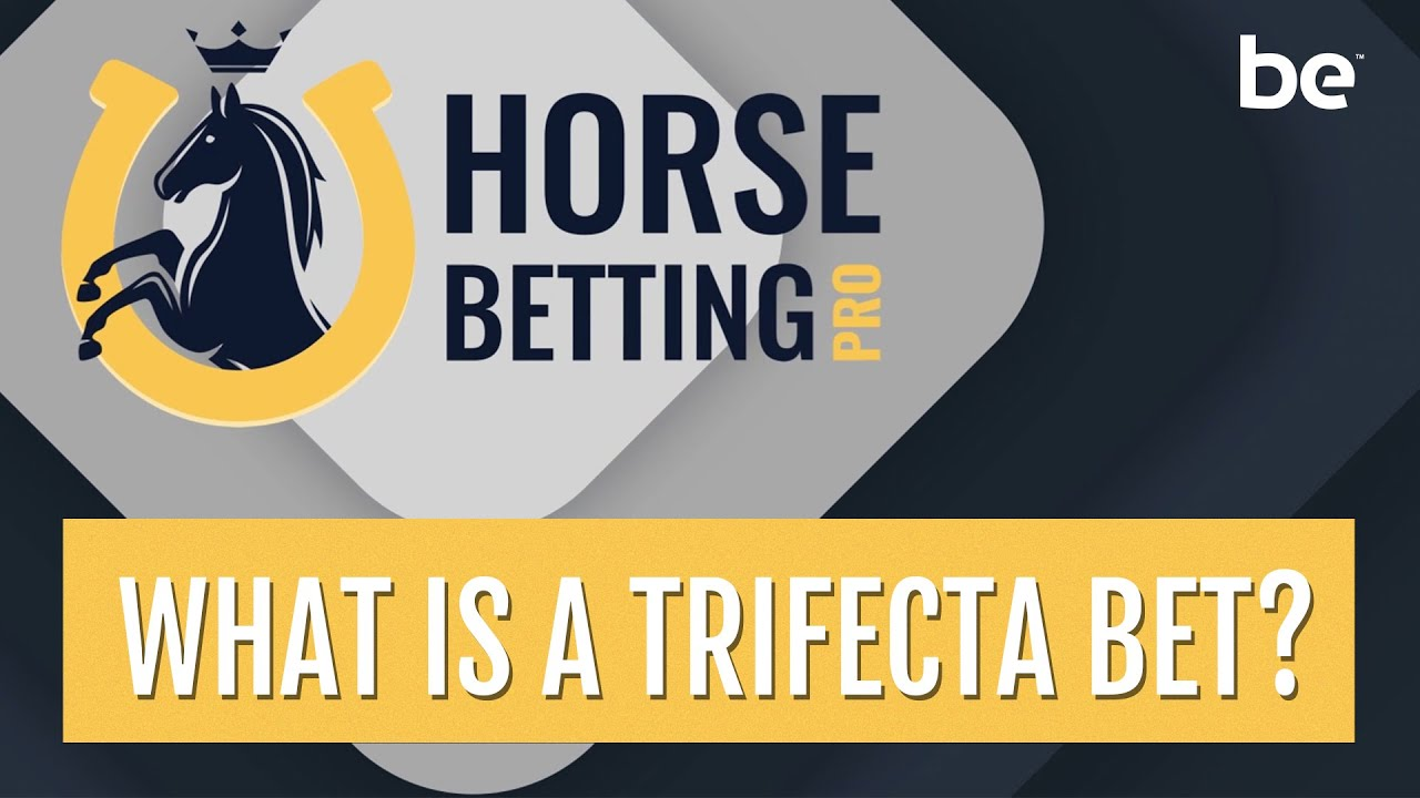 Horse betting strategy trifecta kennels coral betting shop redditch standard