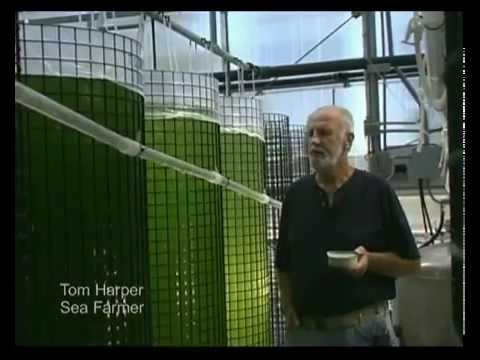 Marine Phytoplankton - Tom Harper Another Day