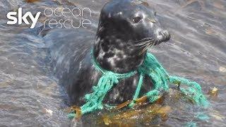 Abandoned fishing gear killing marine life