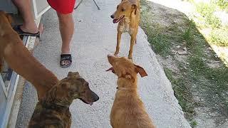 Dog Group 6