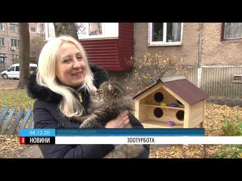 ТРК ВіККА: Зоотурбота: у Черкасах облаштовують вуличне житло для тварин-безхатьок