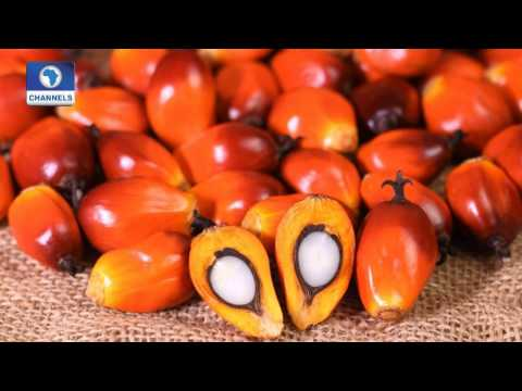 Community Report: Focus On Benefits, Production Of Palm Oil In Nigeria Pt 1