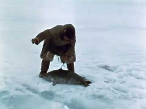Stalking a Seal On Spring Ice- Part 1