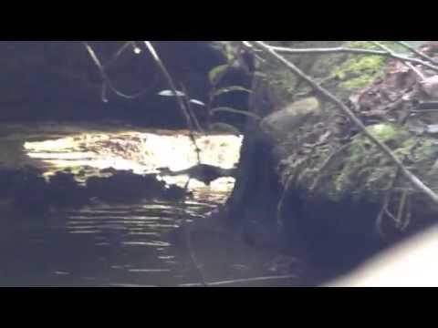 Lost Gold Mine Creek