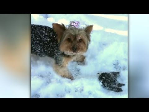 Dog That Uncovers Tiny Creature Frozen In The Snow Immediately Alerts Mom That Help Is Needed