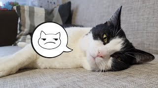 """Cat can't hide his emotions. Why? In the new episode of """"True Catective"""". Episode 6"""