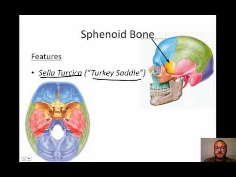 Cranial Bones - YouTube