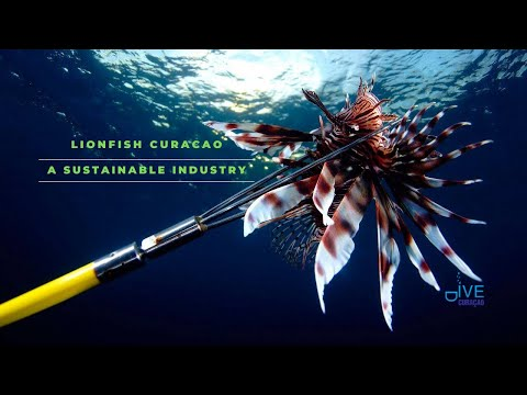 Curaçao Lionfish:  An Invasive Species that is making a positive and sustainable economic impact!