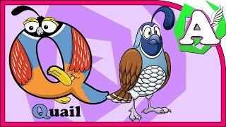 Развивающие видео - Азбука для малышей. Буква Q. Learning animals.