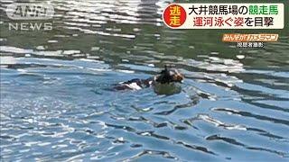 運河泳ぐ競走馬 調教後に脱走 防潮堤飛び越える(20/06/20)