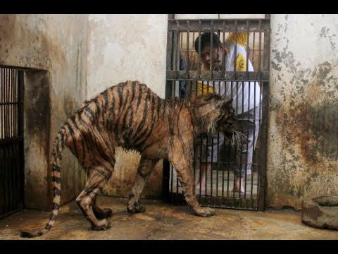 Close Indonesia's Surabaya 'Zoo Of Death' NOW. How Many More Cases Of Animal Abuse Are Needed??