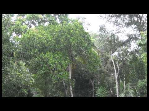 MAZHA, (New Malayalam melody album) By  NIDHI (Sivano)--lyrics- Anil Panchavadi.