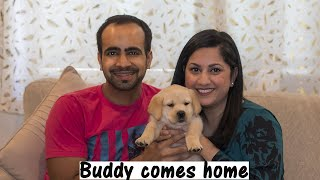 Bringing Home our 7 Weeks Old Labrador Puppy | First Day with Buddy (Hindi with English Subtitles)