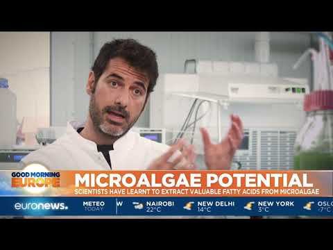 Scientist Learn To Extract Omega-3 From Microalgae | #GME