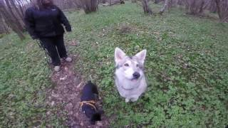 POPPY DOG SPANISH RESCUE - Woodland walk with the Watermill Wolves