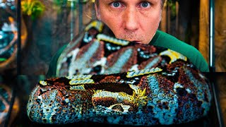 DEADLY VENOMOUS SNAKES INVADE MY REPTILE ZOO!! | BRIAN BARCZYK