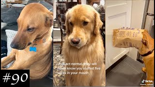 Compilation With Dogs That Have Done Wrong | Guilty Dogs