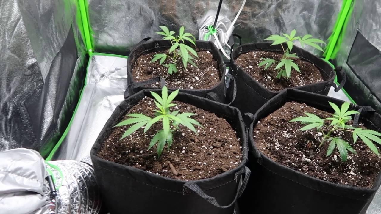 6x6 Grow Tent &