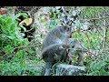 Bad Boy Sweetpea Is Selfish Amari Bored Him Disturb Lori Youlike Monkey 742