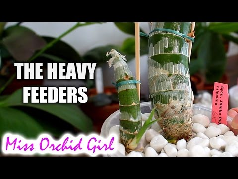 how to feed orchids video