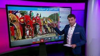 فيديو| فيل هائج يدعس الحاضرين بمهرجان في احتفالات بسريلانكا