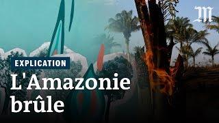 Pourquoi l'Amazonie brûle-t-elle ?