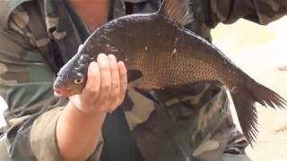 Рыбалка и отдых дикарями на озере Кафтинское в Тверской обл
