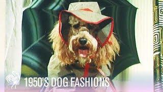 Dog Fashions (1950s)