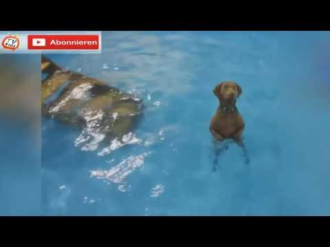 Die lustigsten Videos der Welt präsentiert: Lustige Hunde :D