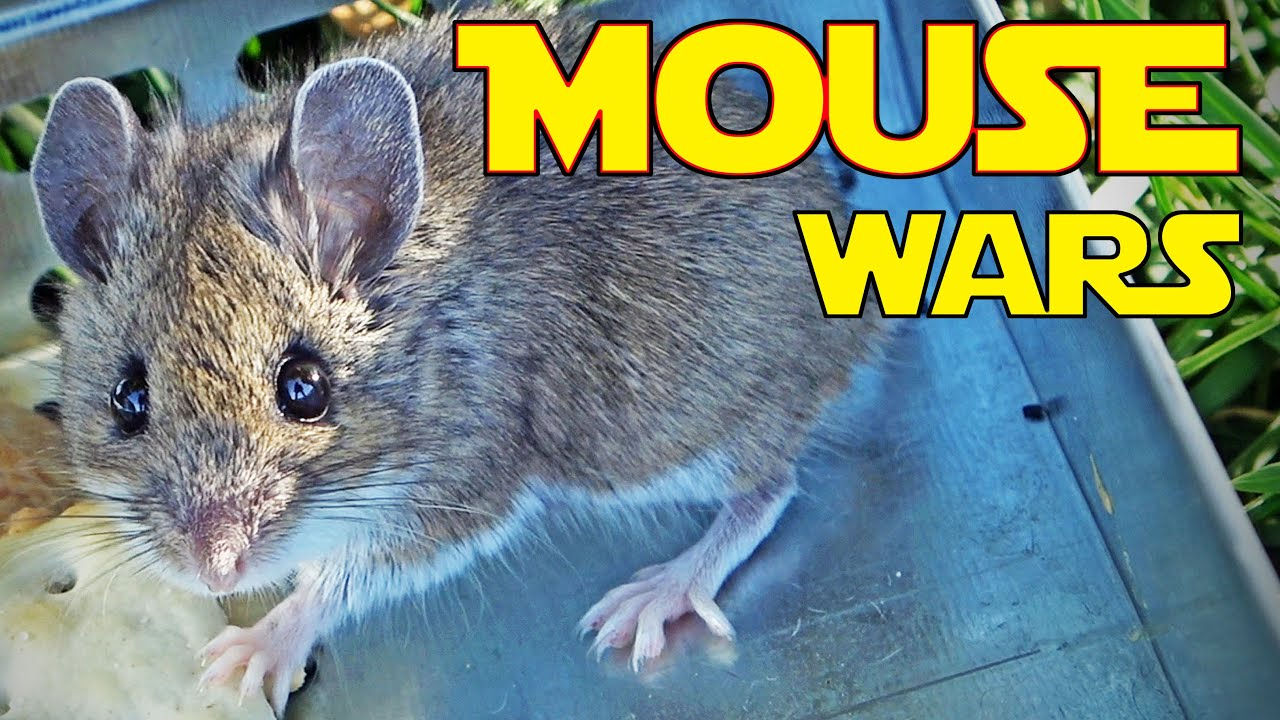 🐭 MOUSE INVADERS -- in our RV! - download from YouTube for free