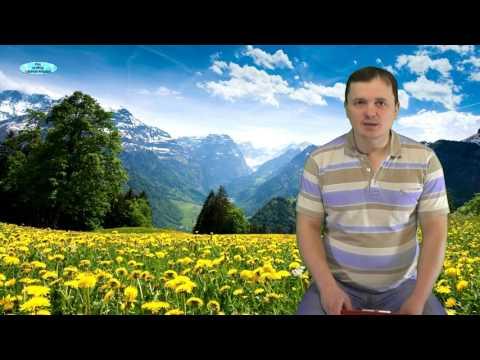 ЛОБЕЛИЯ. ПИКИРОВАНИЕ и ПОДКОРМКИ РАССАДЫ ЛОБЕЛИИ . | подкормить | выращивать | подкормка | красивые | обрезка | лобелия | лобелию | лобелии | цветы | как