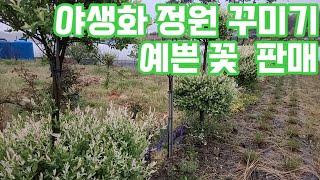 야생화 노지월동식물 전원 생활 베란다화초 반려식물 공기…