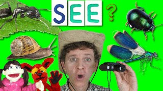 What Do You See? Song with Matt   Bugs Part 2   Learn English Kids