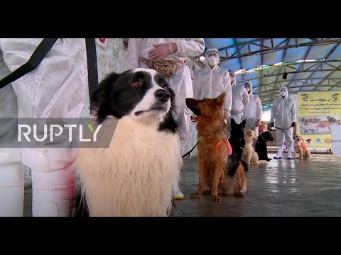 Iran: Tehran centre trains dogs to detect people infected with COVID-19